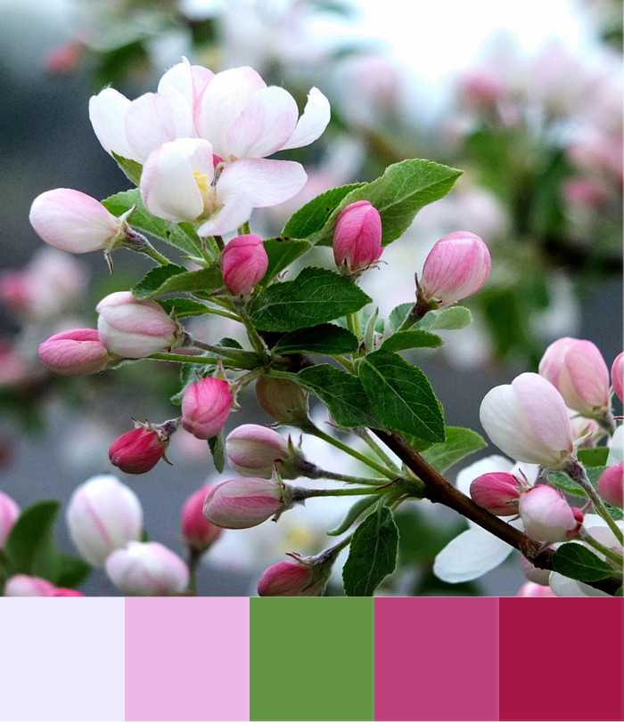 Over the Moon | Crafted Colour Palette - Apple Blossom