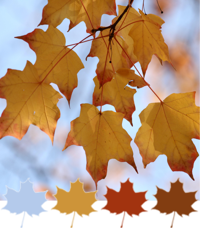 fall-leaves-colour-palette.png