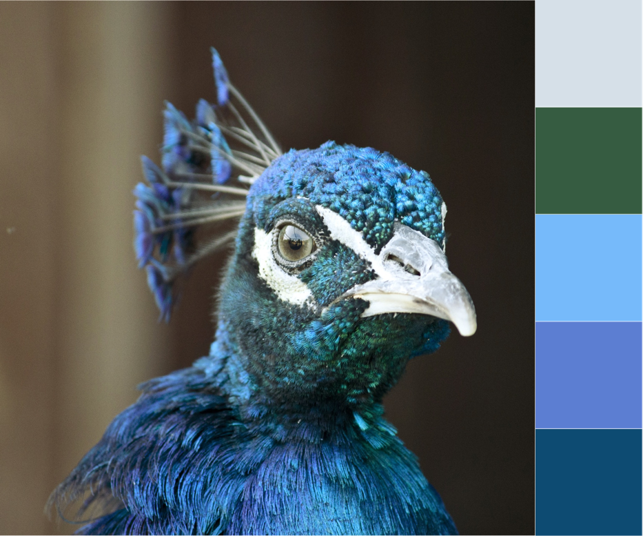Over the Moon| Crafted Colour Palette - Peacock Tones