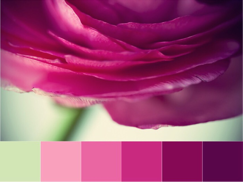 Over the Moon | Crafted Colour Palette - Rose Petal